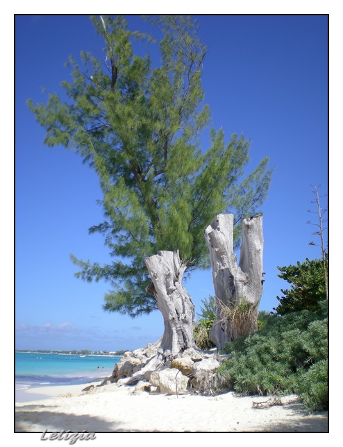 Gran Cayman-dscn4711-jpg