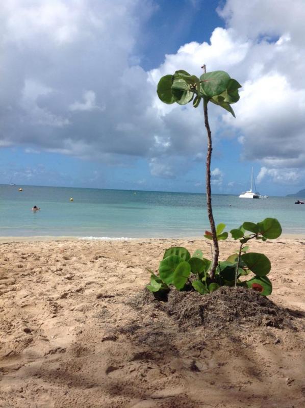 2014/12/11 Martinica, Costa Fortuna-martinica-4-jpg