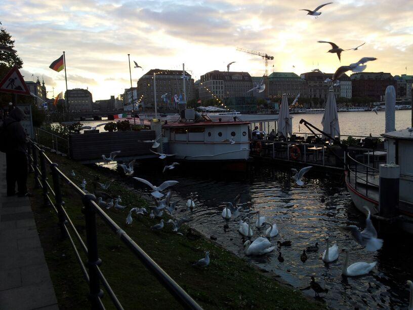 #Amburgo #seatrade #liveboat #crociere (11)
