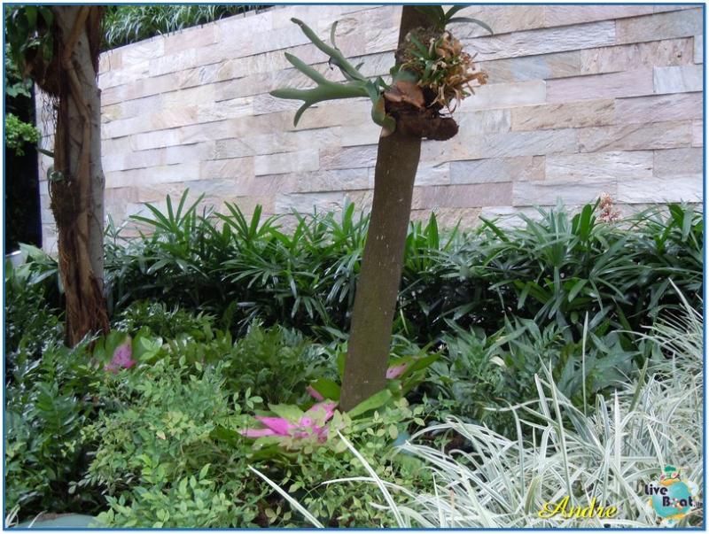 -4-royal-caribbean-oasis-central-park-jpg