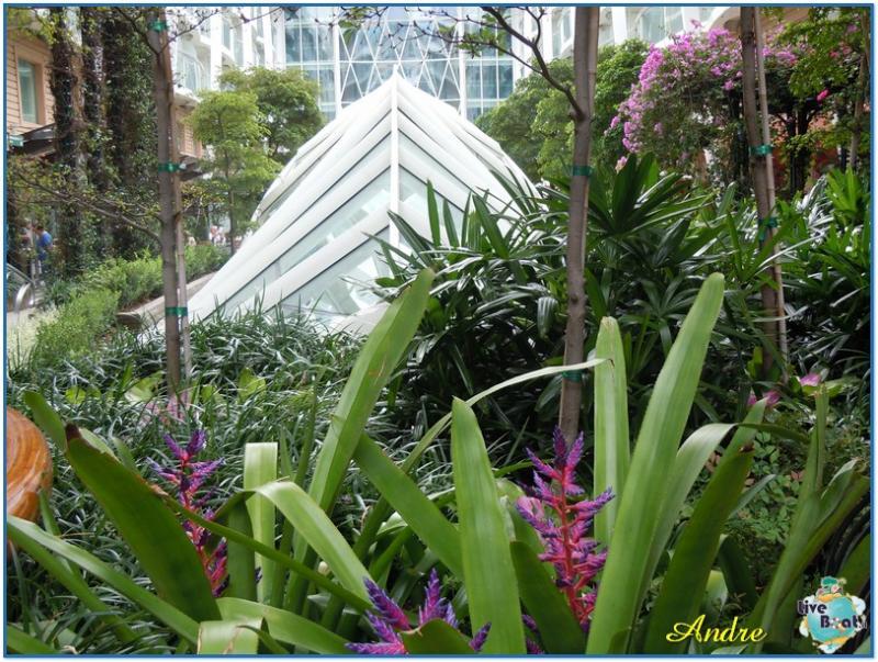-5-royal-caribbean-oasis-central-park-jpg