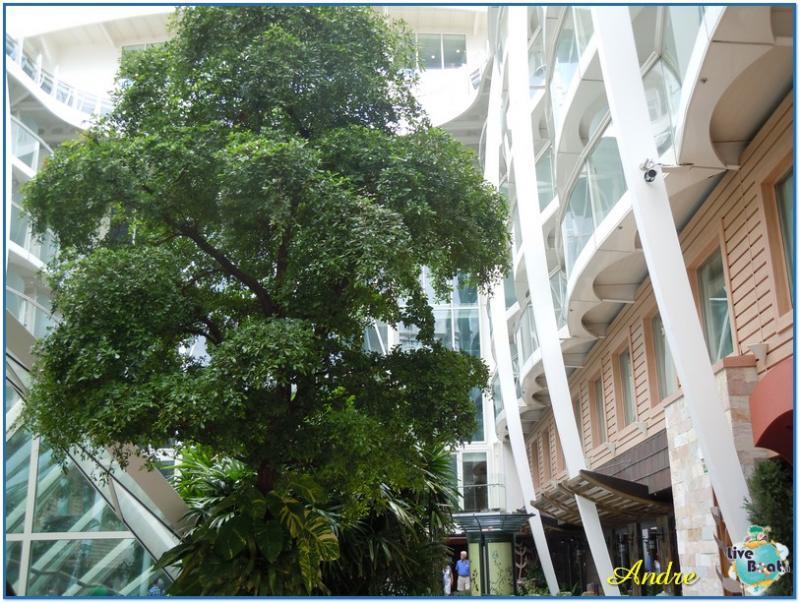 -7-royal-caribbean-oasis-central-park-jpg