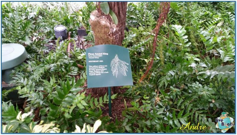 -1-royal-caribbean-oasis-central-park-jpg