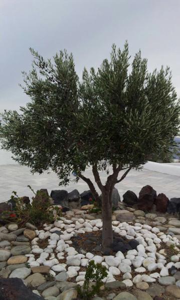 2014/10/08 Santorini Celebrity Reflection-imageuploadedbytapatalk1412781443-332837-jpg