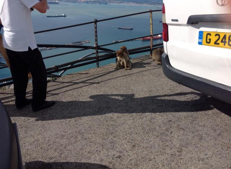 2014/11/29 Costa Fortuna Gibilterra-gibilterra-jpg