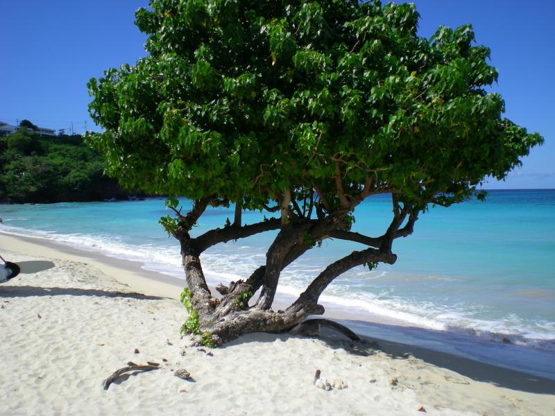 Cosa visitare a Grenada-dscn1106-jpg