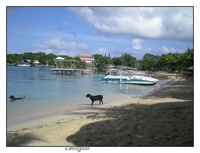 Roatan - Honduras-dscn4785-jpg