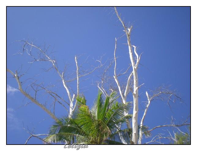 Cosa visitare a Freeport - Bahamas-dscn5067-jpg