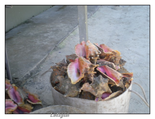 Cosa visitare a Freeport - Bahamas-dscn5039-jpg