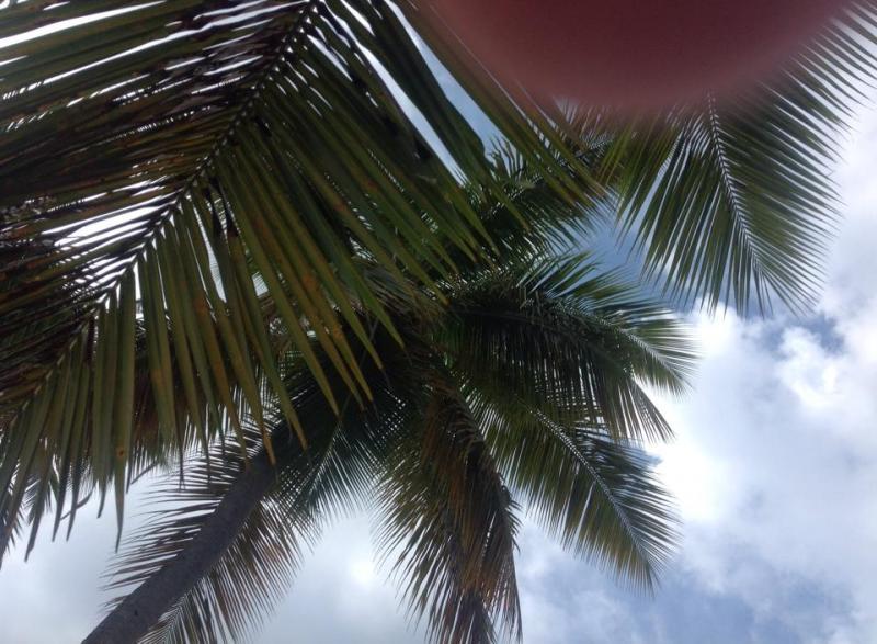 2014/12/15 Tortola Costa Fortuna-tortola-costa-fortuna-caraibi-2-jpg