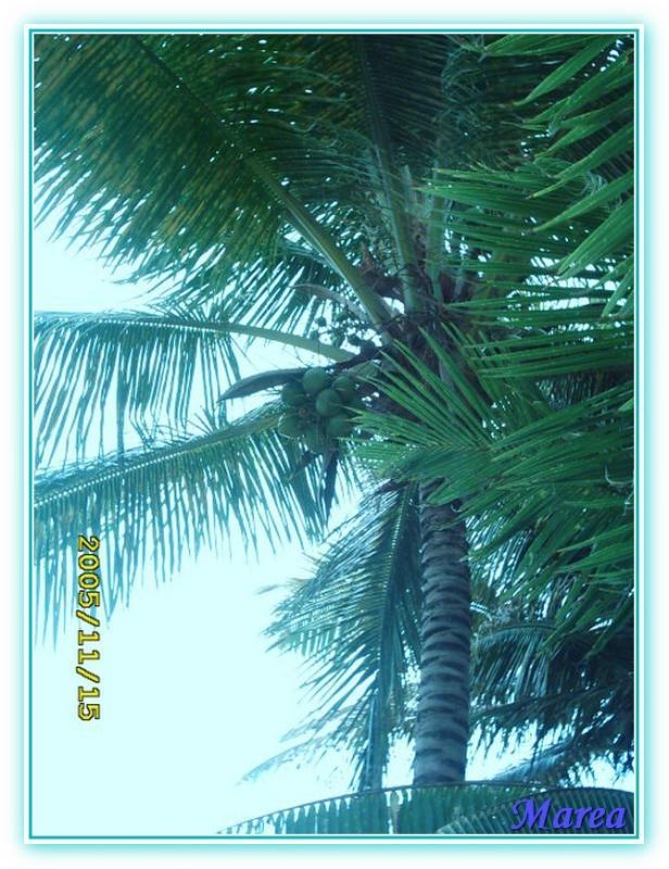 Cosa visitare a Guadalupa-image00007-jpg