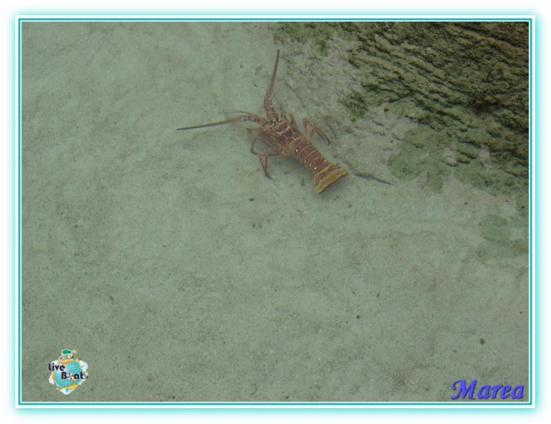 Cosa visitare a Nassau -Bahamas--image00020-jpg