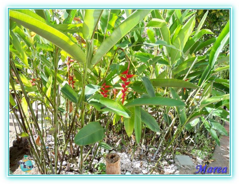 Costa Pacifica Traversata Gran Rio del Sole 28/11-17/12-costa-pacifica-2011-573-jpg