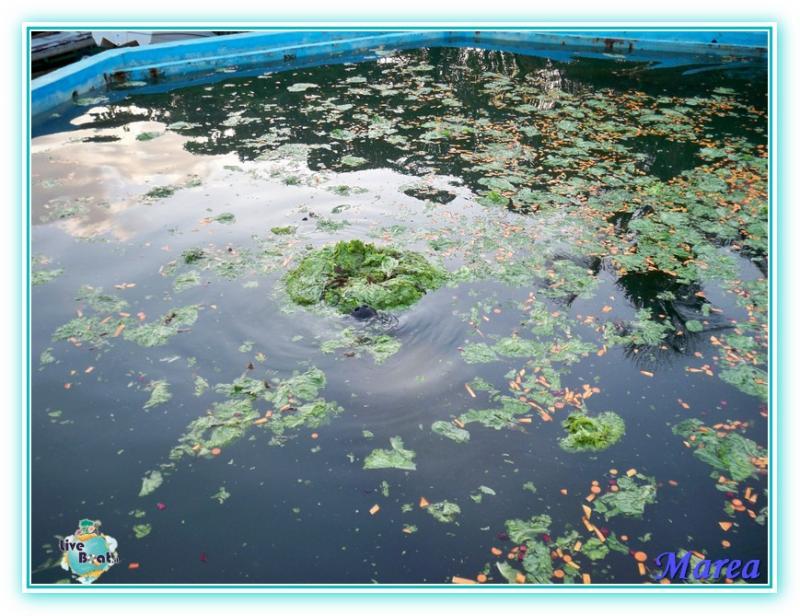 Costa Pacifica Traversata Gran Rio del Sole 28/11-17/12-costa-pacifica-2011-614-jpg