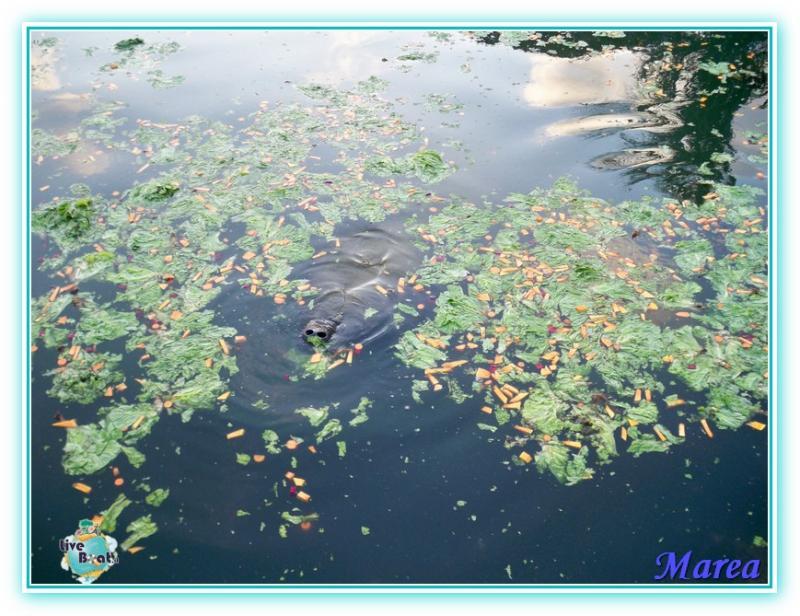 Costa Pacifica Traversata Gran Rio del Sole 28/11-17/12-costa-pacifica-2011-619-jpg