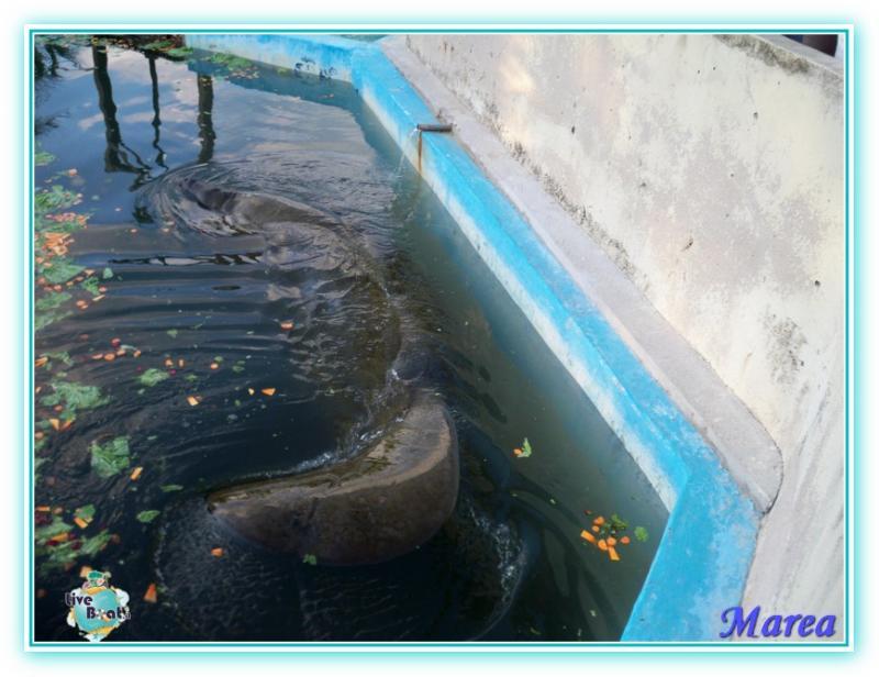 Costa Pacifica Traversata Gran Rio del Sole 28/11-17/12-costa-pacifica-2011-617-jpg