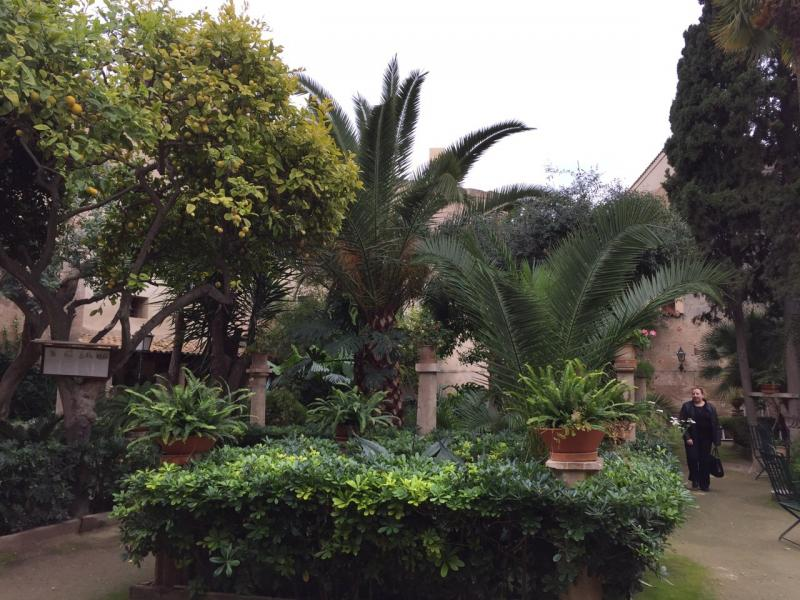 2015/01/06 Palma di Maiorca Costa Diadema-uploadfromtaptalk1420556368463-jpg
