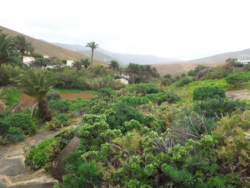 2015/01/18 - Puerto Del Rosario / Fuerteventura - MSC Armonia-uploadfromtaptalk1421608838427-jpg