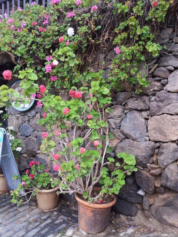 2015/01/18 - Puerto Del Rosario / Fuerteventura - MSC Armonia-uploadfromtaptalk1421609058959-jpg
