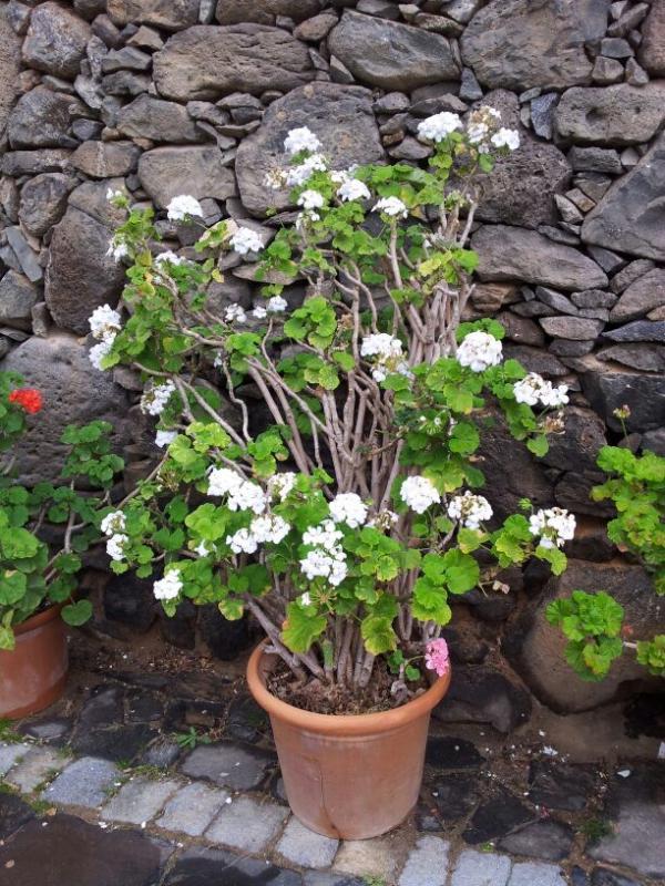 2015/01/18 - Puerto Del Rosario / Fuerteventura - MSC Armonia-uploadfromtaptalk1421609077387-jpg