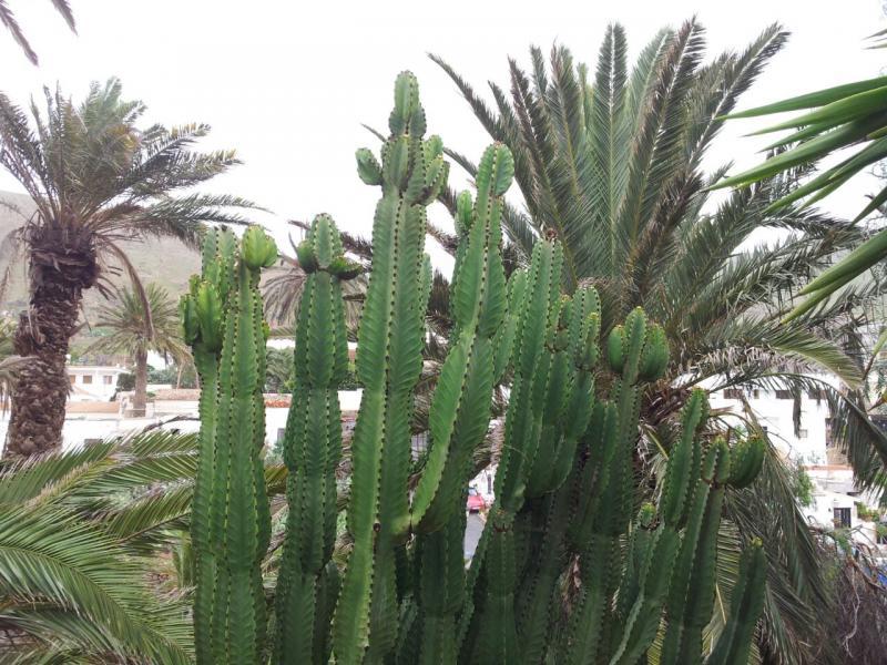 2015/01/18 - Puerto Del Rosario / Fuerteventura - MSC Armonia-uploadfromtaptalk1421609545775-jpg