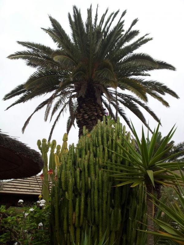 2015/01/18 - Puerto Del Rosario / Fuerteventura - MSC Armonia-uploadfromtaptalk1421609559828-jpg