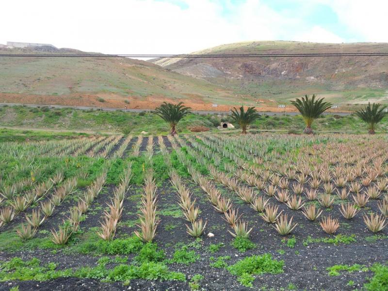2015/01/18 - Puerto Del Rosario / Fuerteventura - MSC Armonia-uploadfromtaptalk1421609927273-jpg