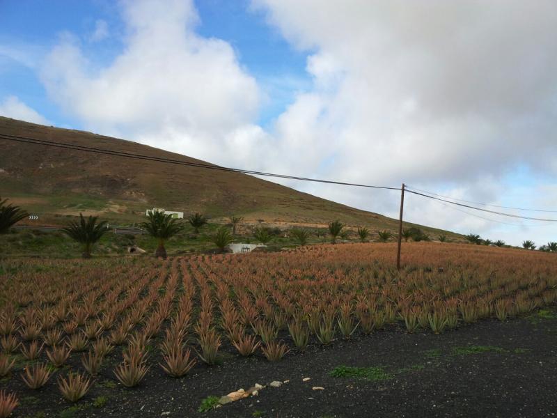 2015/01/18 - Puerto Del Rosario / Fuerteventura - MSC Armonia-uploadfromtaptalk1421609999839-jpg