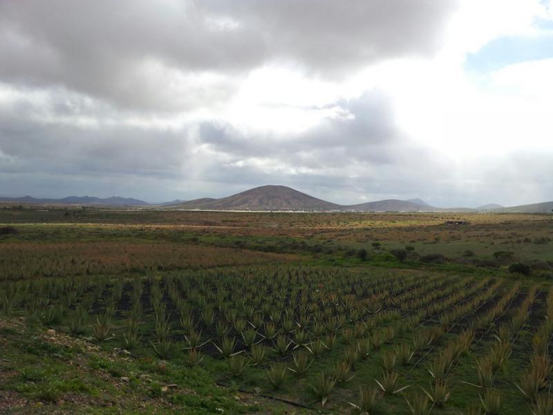 2015/01/18 - Puerto Del Rosario / Fuerteventura - MSC Armonia-uploadfromtaptalk1421610012712-jpg