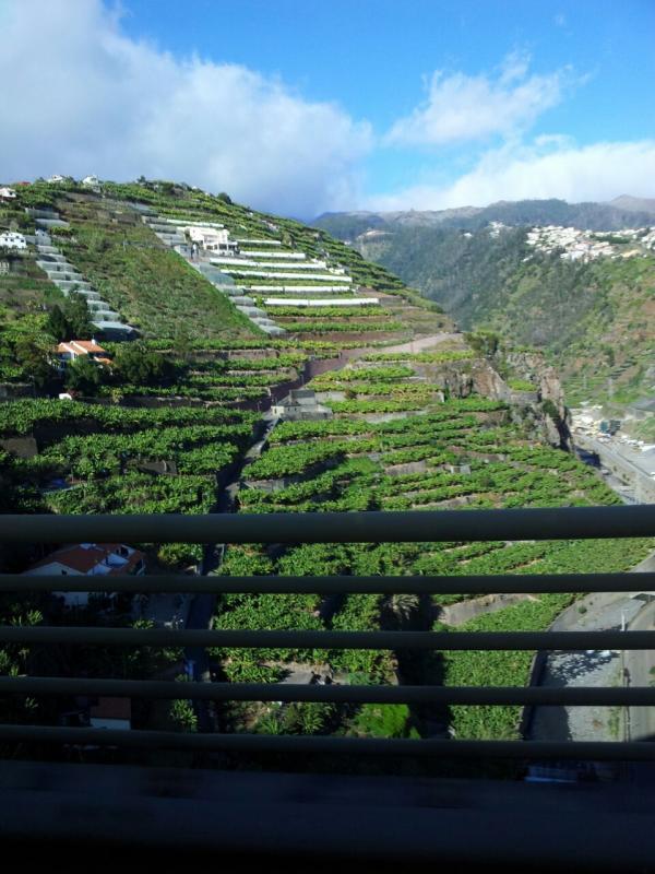 2015/01/20 Funchal - MSC Armonia-img-20150120-wa0087-jpg