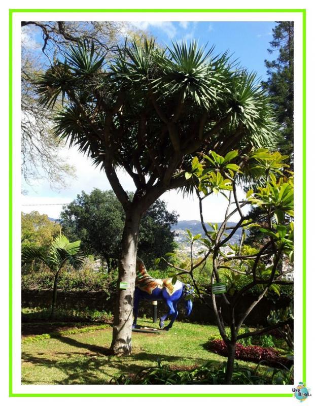 2015/01/21 - Funchal - MSC Armonia-27mscarmonia-vacanzaideale-reinassanceprogramm-msc-crociere-vacanzaisolecanarie-jpg