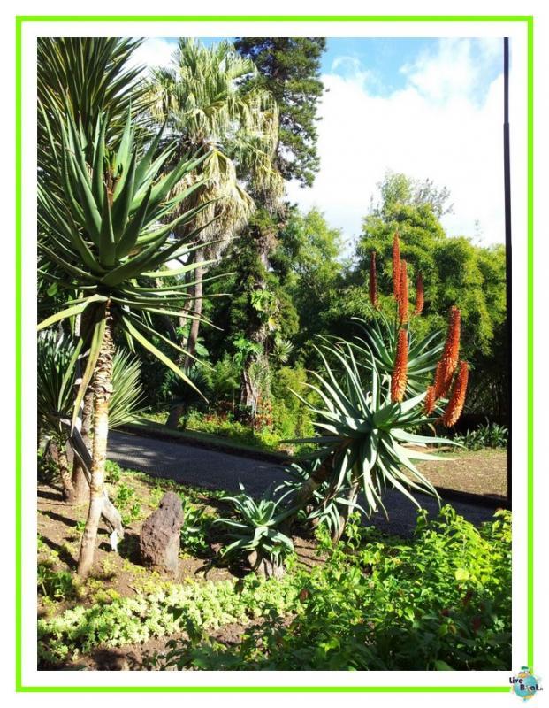 2015/01/21 - Funchal - MSC Armonia-45mscarmonia-vacanzaideale-reinassanceprogramm-msc-crociere-vacanzaisolecanarie-jpg