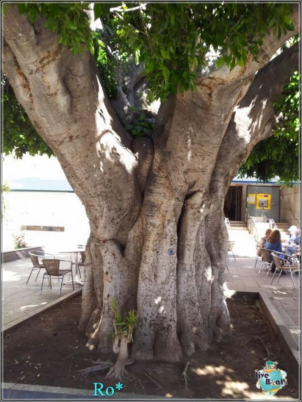 2015/01/22 - Santa Cruz de La Palma - MSC Armonia-foto-mscarmonia-santacruz-direttaliveboat-crociere-50-jpg