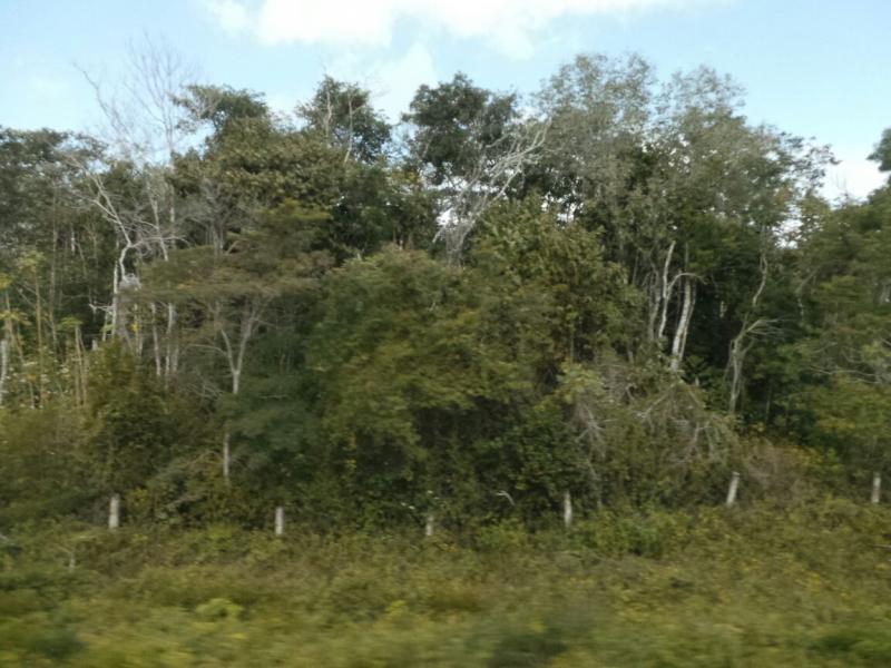 2015/02/17 Costa Luminosa Costa Maya - Messico-uploadfromtaptalk1424208848164-jpg