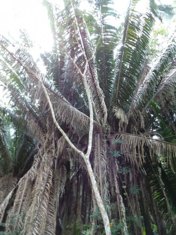2015/02/17 Costa Luminosa Costa Maya - Messico-uploadfromtaptalk1424209162403-jpg