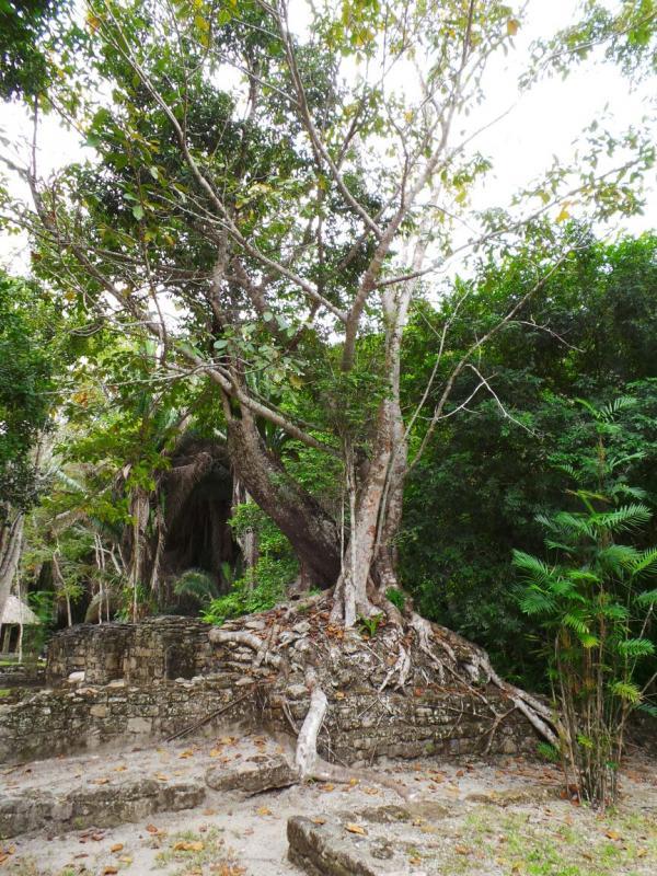 2015/02/17 Costa Luminosa Costa Maya - Messico-uploadfromtaptalk1424209376832-jpg