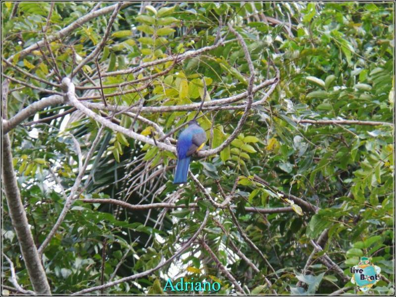 2015/02/18 Costa luminosa Belize - Messico-foto-costaluminosa-belize-direttaliveboat-crociere-39-jpg