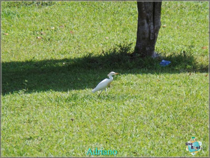 2015/02/18 Costa luminosa Belize - Messico-foto-costaluminosa-belize-direttaliveboat-crociere-40-jpg