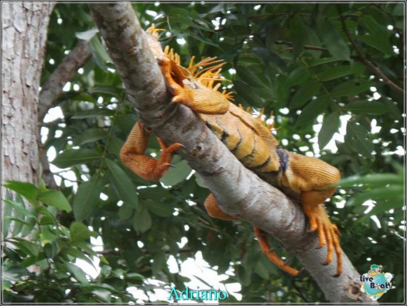 2015/02/18 Costa luminosa Belize - Messico-foto-costaluminosa-belize-direttaliveboat-crociere-43-jpg