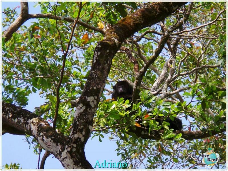 2015/02/18 Costa luminosa Belize - Messico-foto-costaluminosa-belize-direttaliveboat-crociere-45-jpg