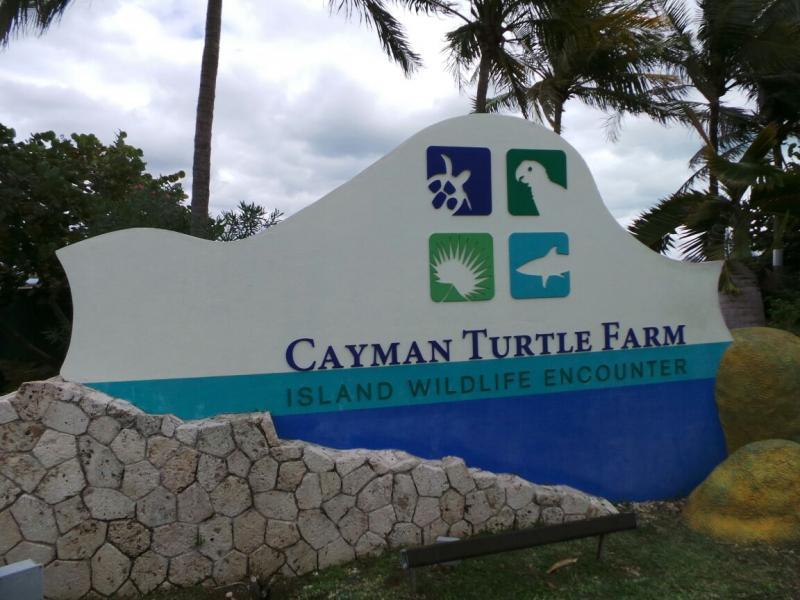 2015/02/20 Costa Luminosa Gran Cayman - Isole Cayman-grand-cayman-costa-luminosa-19-jpg