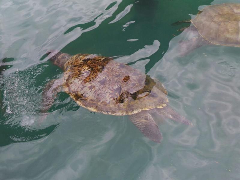 2015/02/20 Costa Luminosa Gran Cayman - Isole Cayman-liveboat-crociere-costa-luminosa-2-jpg