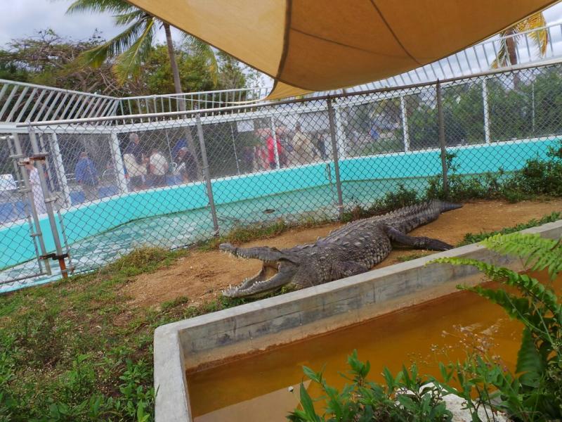 2015/02/20 Costa Luminosa Gran Cayman - Isole Cayman-liveboat-crociere-costa-luminosa-3-jpg