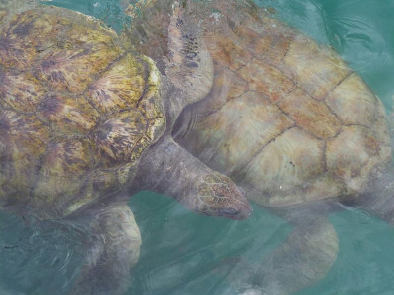 2015/02/20 Costa Luminosa Gran Cayman - Isole Cayman-liveboat-crociere-costa-luminosa-5-jpg