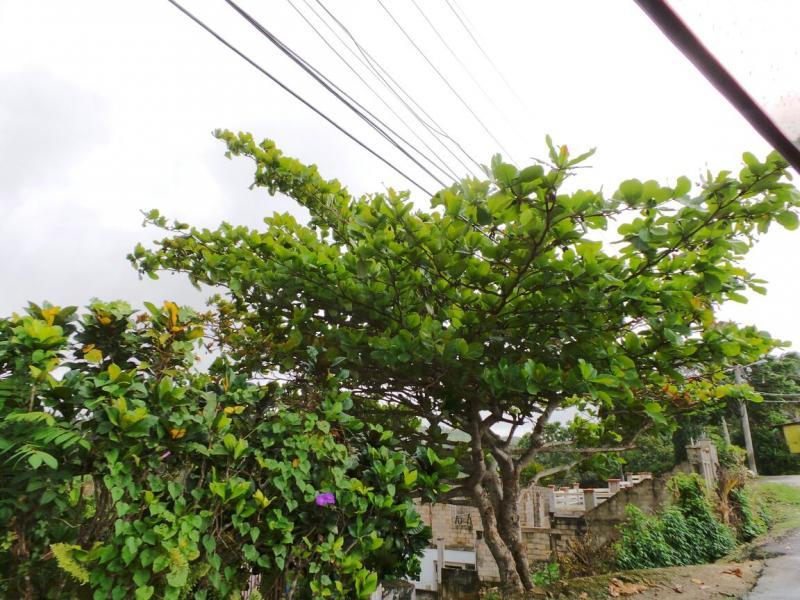 2015/02/21 Costa Luminosa Ocho Rios - Giamaica-tour-ocho-rios-20-jpg