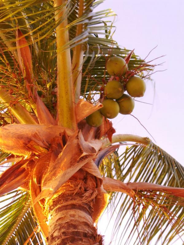 2015/02/22 Costa Luminosa Grand Turks - Turks e Caicos Caraibi-gran-turk-caichos-costa-luminosa-6-jpg