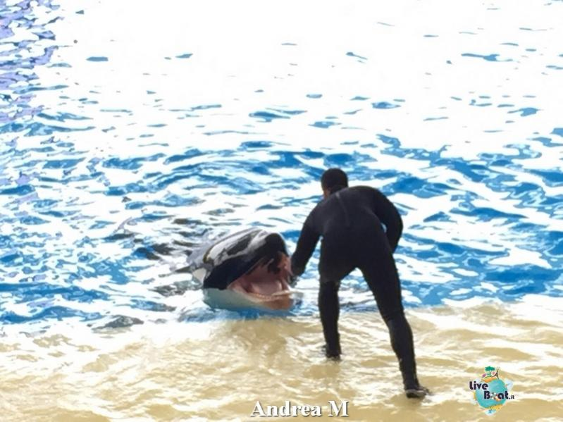 2015/03/08 Tenerife MSC Fantasia-15-foto-msc-fantasia-isole-sole-tenerife-diretta-liveboat-crociere-jpg