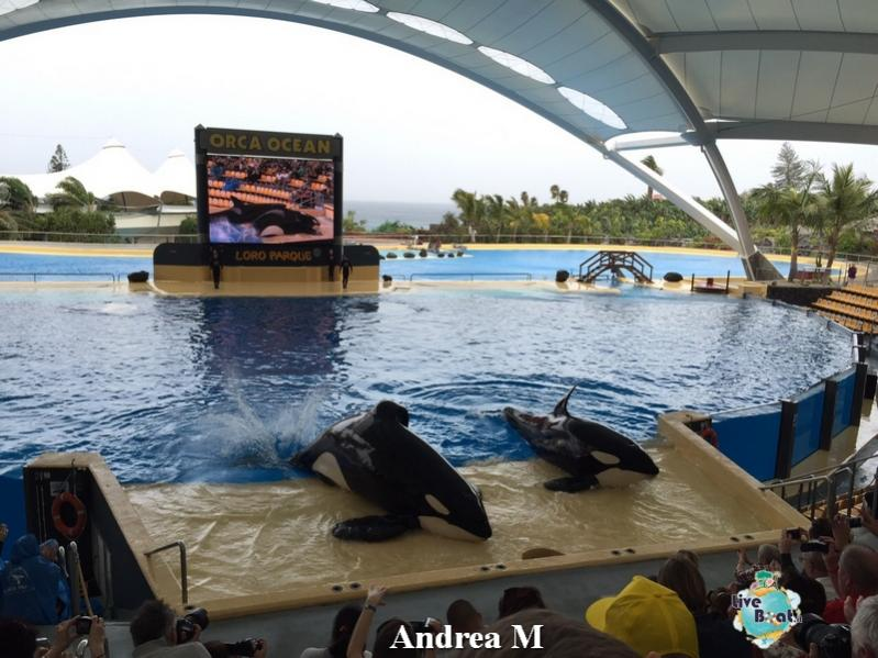 2015/03/08 Tenerife MSC Fantasia-1-foto-msc-fantasia-isole-sole-tenerife-diretta-liveboat-crociere-jpg