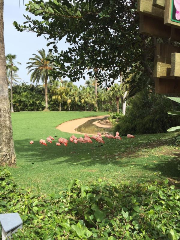 2015/03/08 Tenerife MSC Fantasia-uploadfromtaptalk1425825574405-jpg