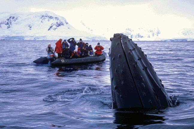 2015/06/07 MSC Splendida Germania, Norvegia, Svalbard and Jan Mayen Islands-arctic-cruise-polar-bears-s1-jpg